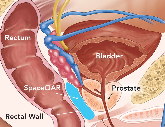 Men's Urinary Illustration